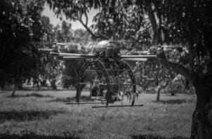 Un dron que detecta aguacates con hongos. Los sistemas agroalimentarios pueden volverse más resistentes mediante el uso de sensores en el campo, inteligencia artificial, drones, entre otros. Foto: EFE/FIU.
