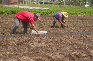 Panamá no puede seguir con las mismas herramientas de financiamiento y de apoyo a los productores. Archivo