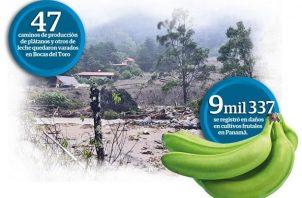 El ministro de Desarrollo Agropecuario, Augusto Valderrama señaló que el Gobierno Nacional está brindando respuestas para restablecer los caminos de producción.