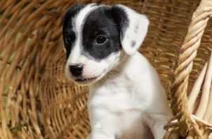 La leche materna es el primer alimento ideal para los perros cachorros. Foto: Ilustrativa /Pixabay