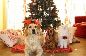 Puedes seguir ciertos consejos para garantizar el disfrute de la mascota y evitar pasar las fiestas en consulta veterinaria. Foto: Ilustrativa / Pixabay