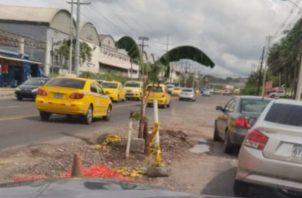 La mata de plátano fue ubicada a la altura de la comunidad de la Sagrada Resurrección. Foto: Diómedes Sánchez S.