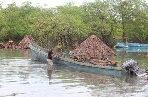 La extracción de mangle para la elaboración del carbón ha sido por generaciones la principal fuente de empleo para las familias de Espavé, junto a la venta de pescado y almejas.