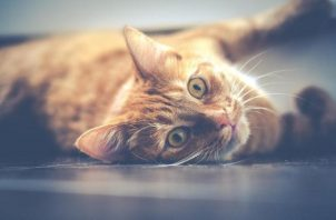 Algunos cambios en el comportamiento pueden ser indicios de estrés. Foto: Ilustrativa / Pixabay
