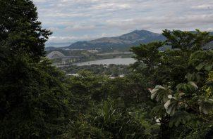 Un total de 50 mil hectáreas de bosques buscan ser restauradas. Foto de archivo