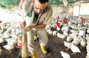 En Panamá unas tres plantas avícolas exportarían a China.