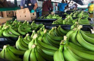 La comercialización de estos cultivos genera alrededor de 200 millones de dólares en divisas y más de 8,600 empleos directos.