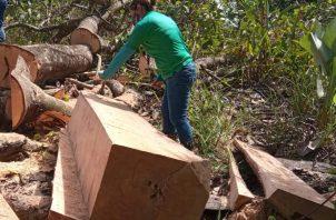 El personal de MiAmbiente procedió a levantar el acta de retención del producto forestal, así como su posterior custodia. Foto: Mayra Madrid