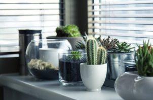 Hay que tomar en cuenta que las plantas requieren cuidados. Foto: Ilustrativa / Pixabay