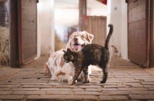 Para prevenir la rabia es necesario vacunar periódicamente a su mascota. Foto: Ilustrativa / Pixabay