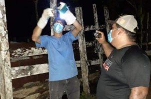 El funcionario comentó que en el caso de la detección de la brucelosis se mantiene un programa con productores para realizar la toma de muestras de sangre de los bovinos, con el fin de hacer el diagnóstico.