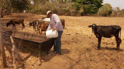 Animales afectados por la falta de agua. Foto: Epasa
