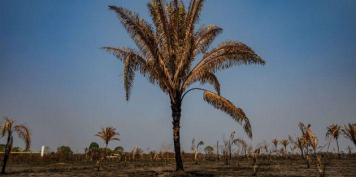 La mitad o más de la selva amazónica podría erosionarse y convertirse en sabana. Pastizal cerca de la selva en Brasil. Foto/ Victor Moriyama para The New York Times.