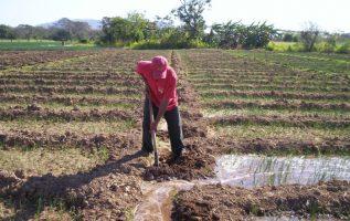 De seguir la importación de productos, el abandono del agro y la migración de jóvenes, pronostican la desaparición del sector en pocos años. Archivo