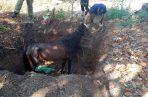 Lograron sacar al animal del hueco sin un rasguño.  Foto/Thays Domínguez